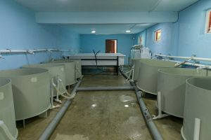 Fish Incubation Demonstration Farm in the Village of Tsoniarisi